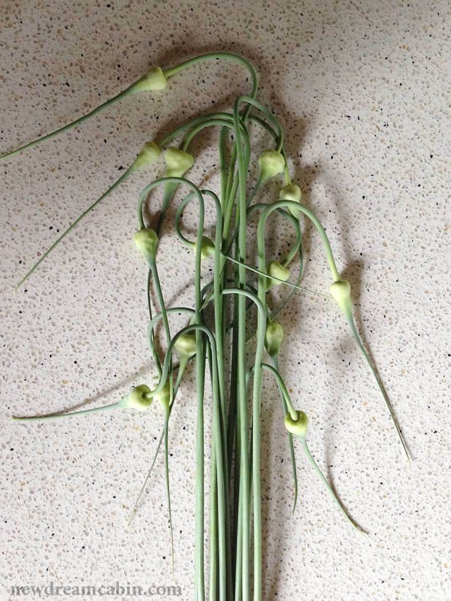 garlic_scapes_WEB
