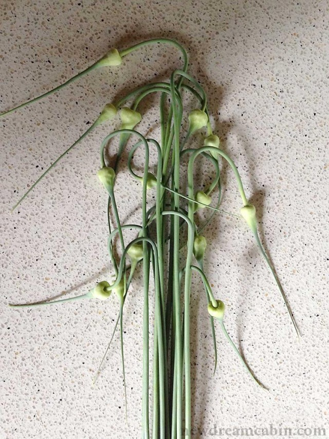 garlic_scapes