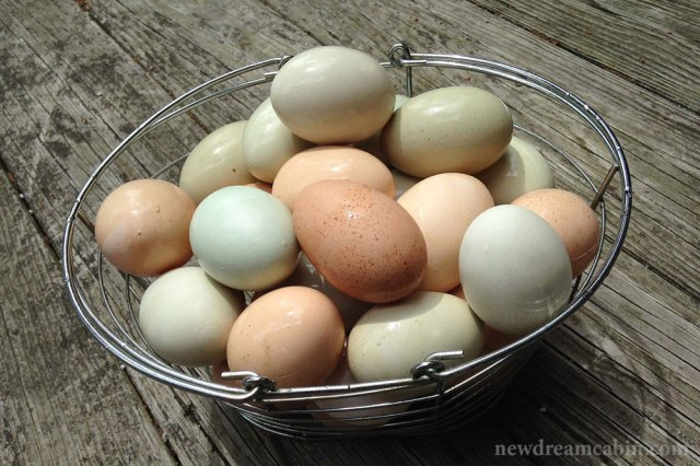 pastured_eggs_wm